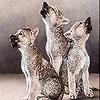 Three Cute Wolf Slide Puzzle