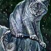 Dark Cat  In The Woods Slide Puzzle
