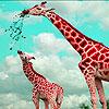 Giraffes In The Desert Puzzle