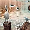 Four Birds On The Lake Slide Puzzle